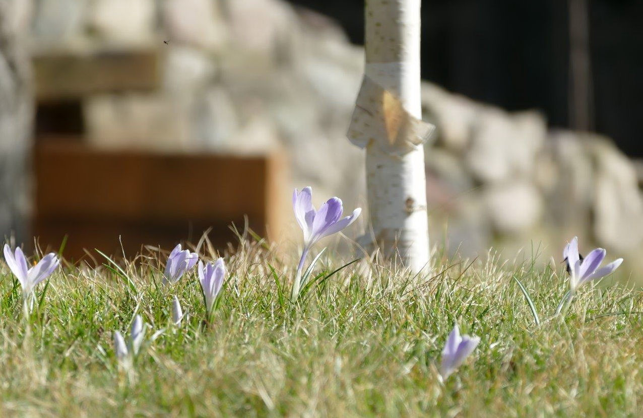odliczamy do wiosny