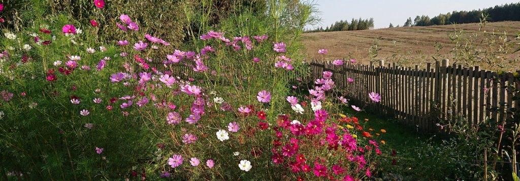ogród od podstaw
