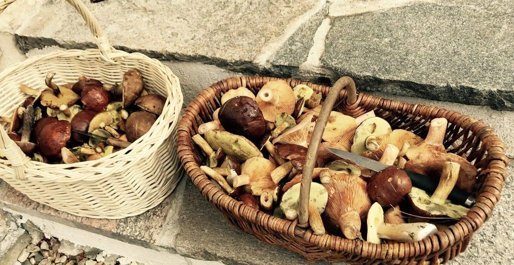 podlaskie hygge - grzyby