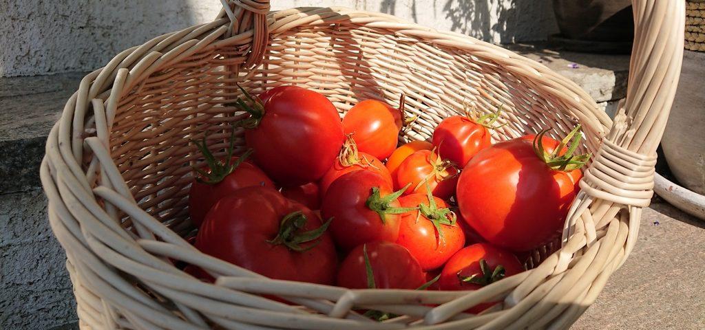 podlaskie hygge - pomidory