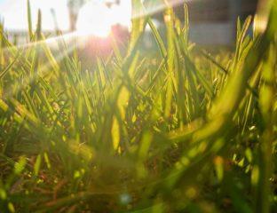 Trawnik mamy skomplikowany_1