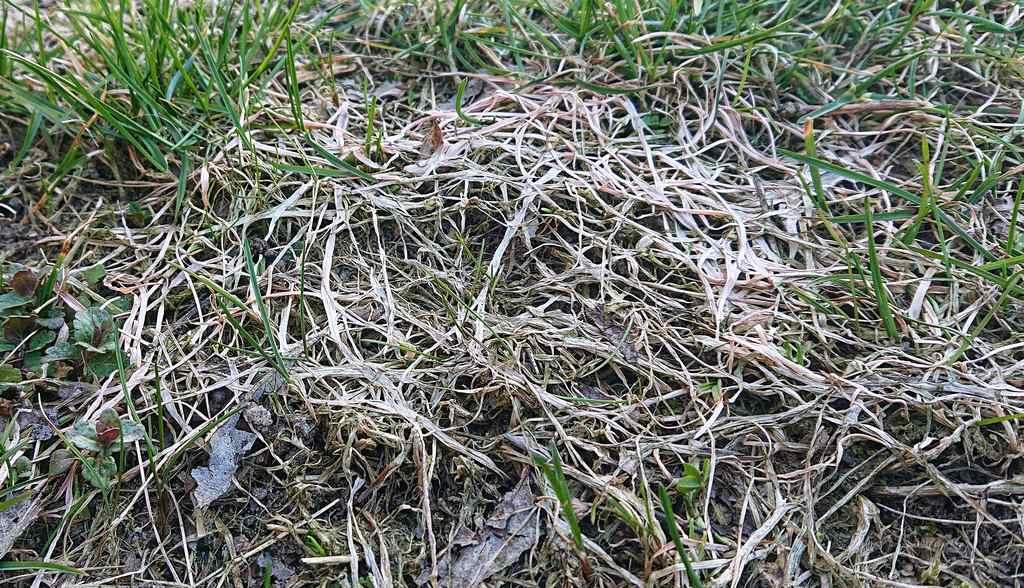Trawnik mamy skomplikowany