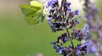 Motyle w Niebie Za Miastem