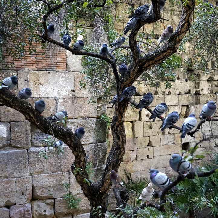 Duzo ptakow