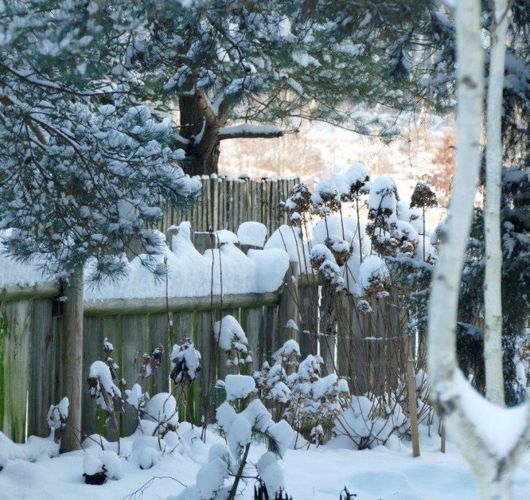 Zima w Bociance